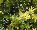 a wet web