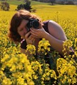 Photographing canola flowers