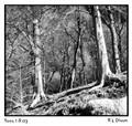 Trees I-R 03 Titled