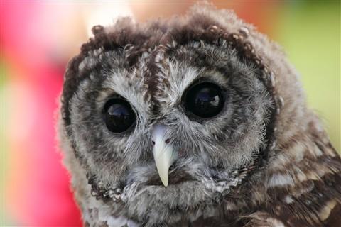 IMG_1361-owl
