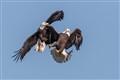 121021_Birds__T0P3823-20121021-NWFPC
