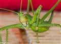 Green beuty
