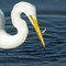 2-16-14 #393  egret (1 of 1)