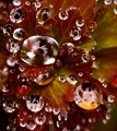 Drizzle Drops
