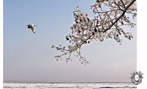Winter Magic Land