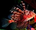 Vegas Aquarium