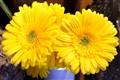 Florists Flowers (1-0018)