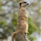 Knowsley Safari Park 20120505 0196