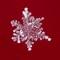 Snowflake 2014 P1200001