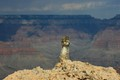Squirrel in the Grand Canyon