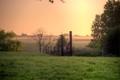 Cow-pasture-mist