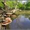 Tree and Fungi