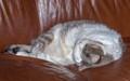 Jack Sleeping