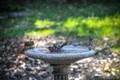 Birds in Bath