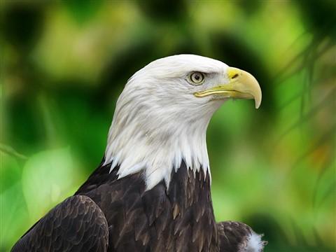 Mcbrig Eagle PP