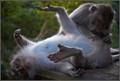 monkeys01