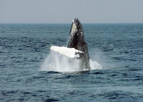 Whale4a
