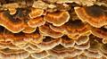 Tree Bark Fungus