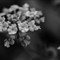 DSC_5731_Snapseed