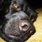 Samo - the doggie