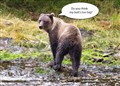 Bear with Poor Self Image