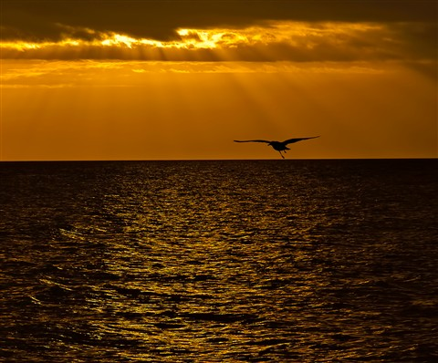 seagullsilhouette