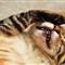 Kampong Melayu Cats (3)