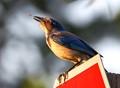 bird bug-1
