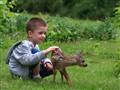 Pipo i Bambi