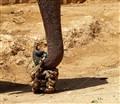 Elephant purse?