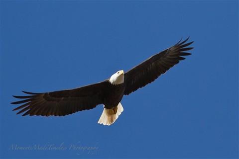 -12_January_eagle_151