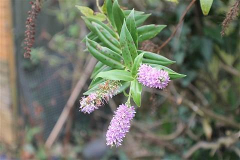Flower at Mum & Dad's Garden_1_250213(1)(1)