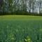 Meadow-6424