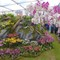 P1010170 Chelsea flower show, 2013