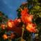 2014-05-29 Flametree 006