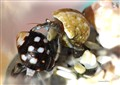 TinyHermitCrab