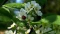 Ladybird climbing