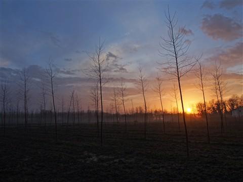 Alberini tramonto nuvole