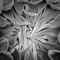 Sunflower Farm_105783_20120615 - bw - Copy