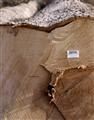 Logged ash