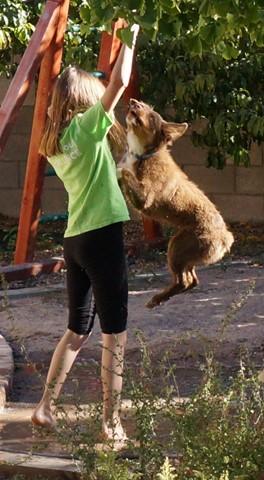 NEX7 jumping dog