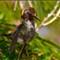 Frumpy feathers 80868 1280w p