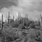 AZ Winter Desert