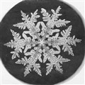 Snowflake, by Wilson A. Bentley ,1890