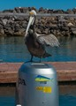 This guy landed on the boat motor as we were returning to the marina..