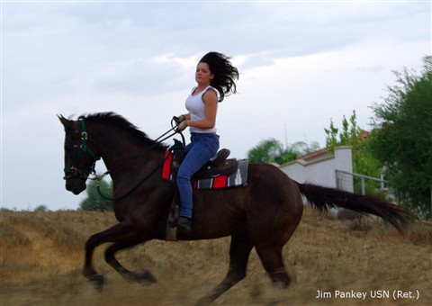 beauty on horseback medium