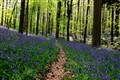 Haller Forest, Brussels-Belgium