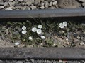 A Flowery Track