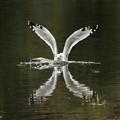 Seagull Splashdown
