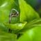Dry Leaf bud